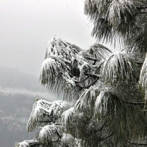 Shimla 3 Days 2 Nights (By Road)